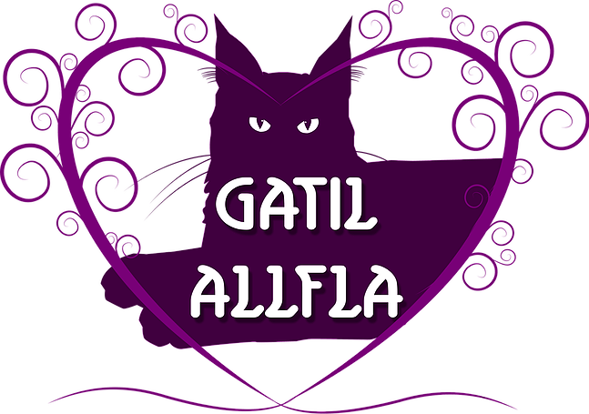 Gatil Allfla | Maine Coon
